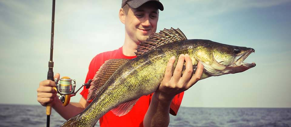 aabsolute lake erie fishing charters guide service