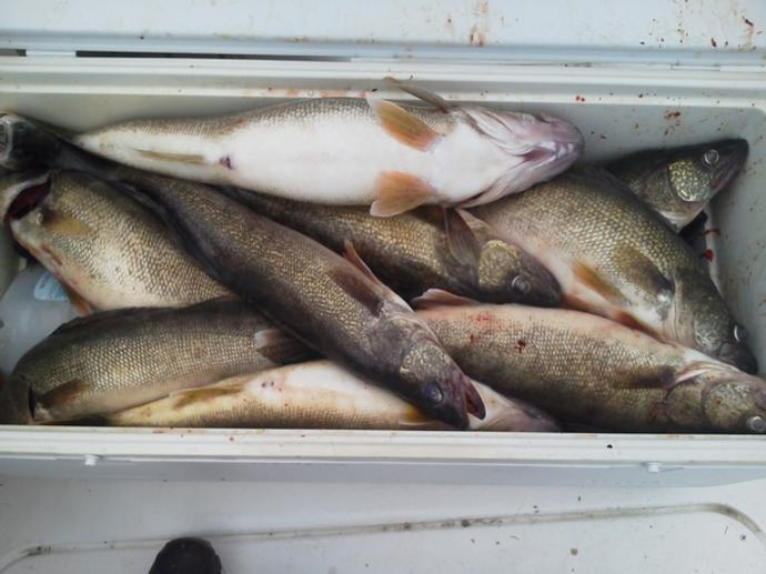 Aabsolute lake erie fishing charters photo 20 for Lake erie walleye fishing charters